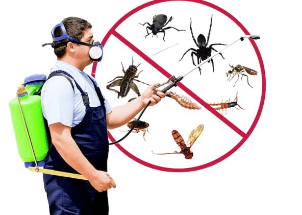 Pest Control Services In Surat