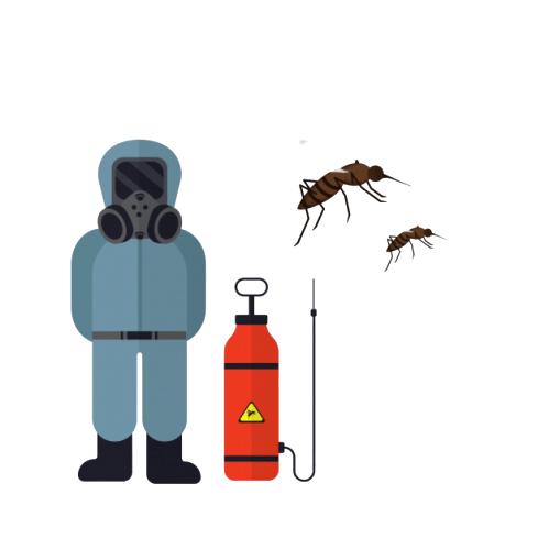 Pest Control Services In Visakhapatnam